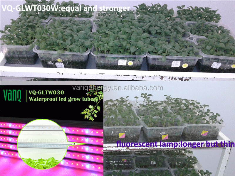 Hydroponic lamp led,RGB/full spectrum/3500k plant grow light,banana tissue culture grow light waterproof