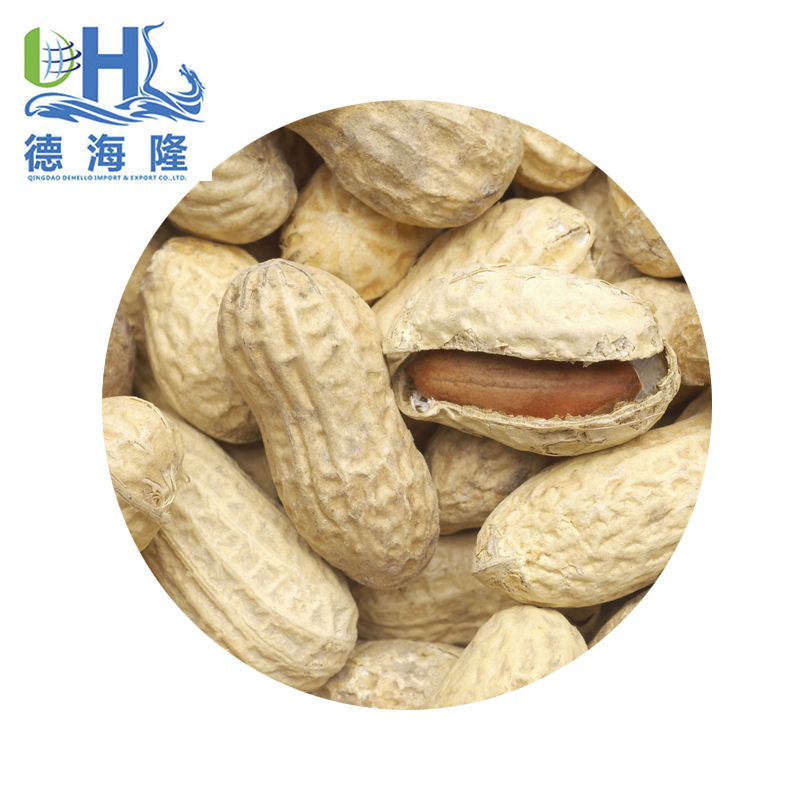 Peanuts/Groundnut/Arachis from China