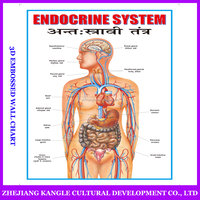 India language PVC environmentally painting educational baby toys wall chart with endocrine system anatomy