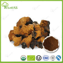 natural herbal chaga mushroom extract powder polysaccharide capsule