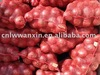 /product-gs/chinese-fresh-red-onion-316399646.html