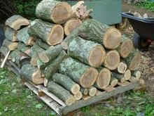 timber logs, pine, oak,beech, wenge, acasia,birch,spruce,ucaletus, white wood,