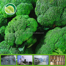 broccoli powder broccoli sprout extract broccoli extract powder