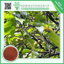 wholesale China factory pygeum africanum extract phytosterol 2.5%