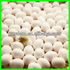 /product-detail/small-ostrich-egg-incubator-safe-and-reliable--694859511.html