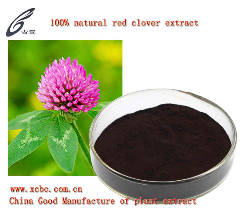red clover extract isoflavones