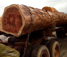 PINE SPRUCE BIRCH OAK ASH LOGS / TIMBER AVAILABLE