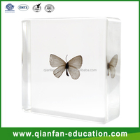 Butterfly plastic diy materials kids toys