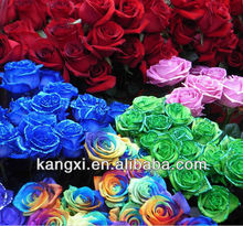 2013 high germination rose seeds/rose flower seeds/rainbow rose seeds for sale