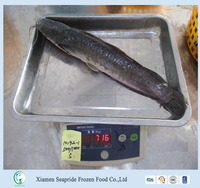Hot Sell Frozen catfish Whole Round