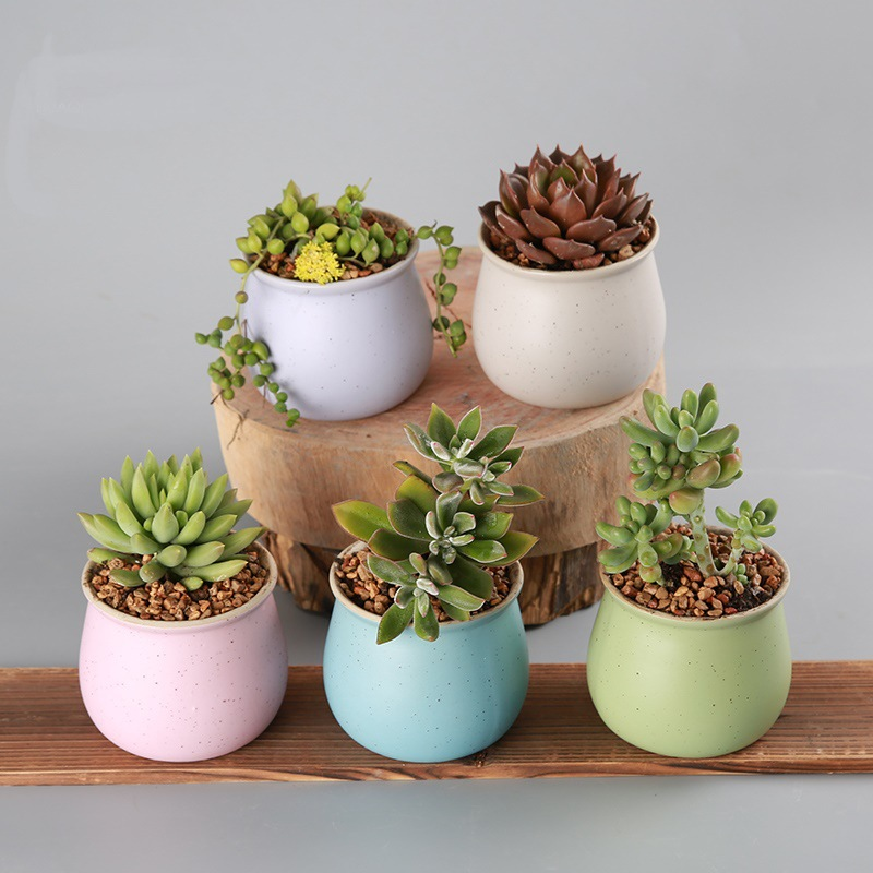 Home & Garden Decoration Plant Flower Pot Ceramic Succulent Pots