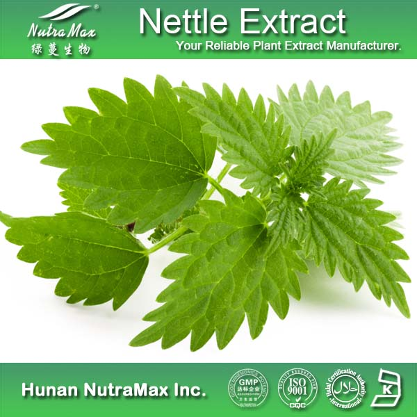 100% Natural Nettle Root Extract/Nettle Root Extract Powder/Nettle Root P.E.