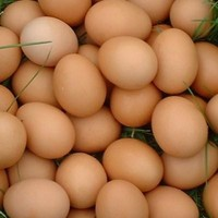 QUALITY FRESH CHICKEN EGGS EXPORTERS