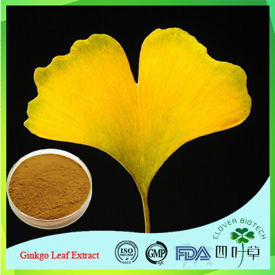 100% Pure Natural ginkgo extract/ginkgo extract powder/flavonoids ginkgo biloba extracts