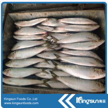 Price of Whole Round All Types of Sardine Fish