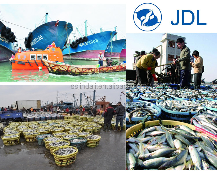 2016 prices frozen style mackerel fish fresh frozen pacific mackerel seafood trading companies