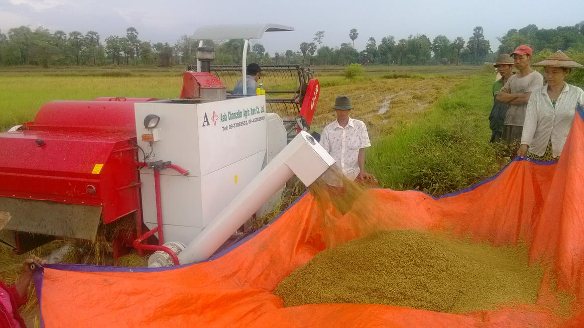 paddy field used rice harvester