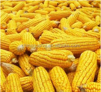 Dry corn/yellow/Wholesale direct from China/animal feed