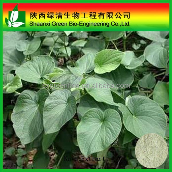 factory supply high quality kava root extract powder /kava kava seeds manufacturer