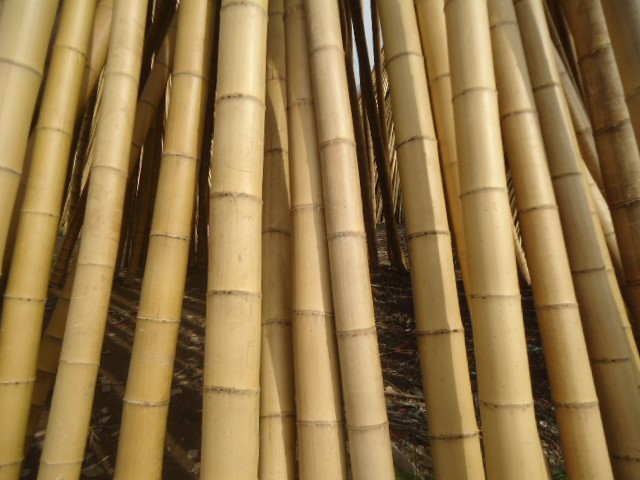 FD-007 good quality Bamboo chip from nature bamboo pole