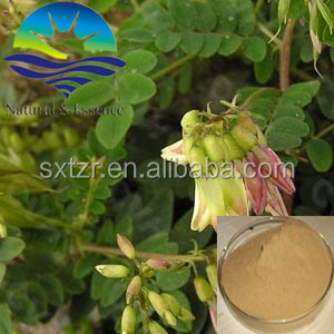 high quality plant extract herb medicine herb extract Astragalus extract 40%,80% wholesale