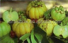 Chinese herbal raw material Garcinia Combogia P.E.