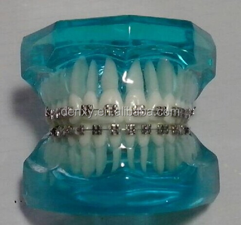 Dental teeth model/ Abutment tooth preparation model/ Cavity preparation tooth model