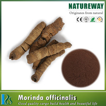 High Standard 100% natural radix morindae officinalis extract