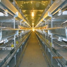 H-type Multi-tier Hot Galvanized Chicken Battery Poultry Cages
