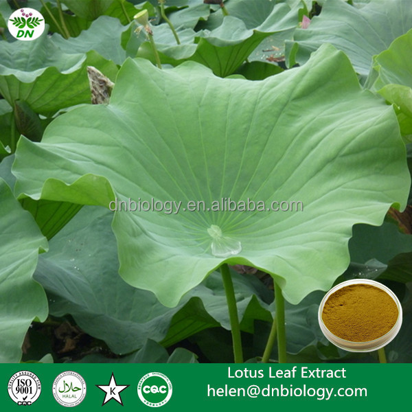 2016 100% plant extract powder lotus leaf extract ,Semen Nelumbinis