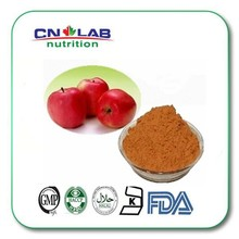 Competitive price water soluble apple extract & apple puree powder & natural apple polyphenols