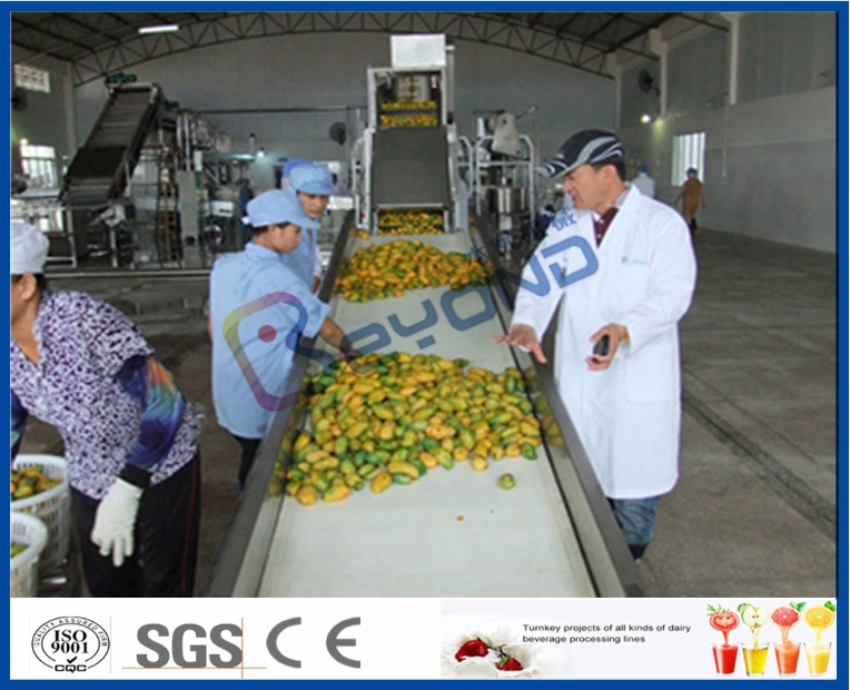 ecomomic method mango processing equipment complete set of mango machine turnkey mango machine
