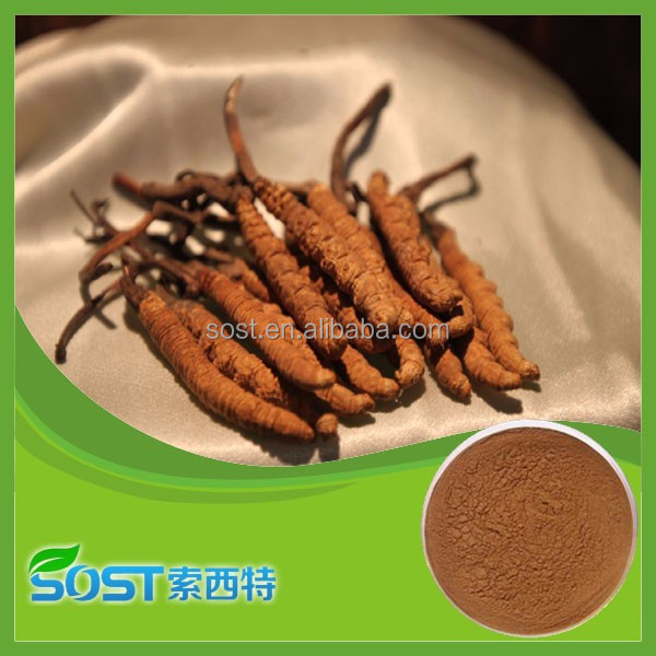 China supply High quality herbal extract cordyceps sinensis extract
