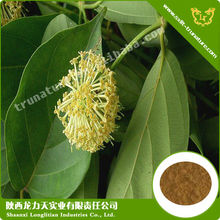 top quality Uncaria Gambir Extract