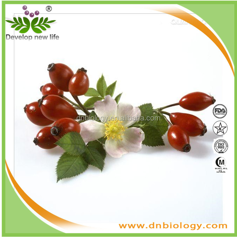 100% natural Rose Hips Extract ,Rosa Canina with Vitamin C Polyphenols