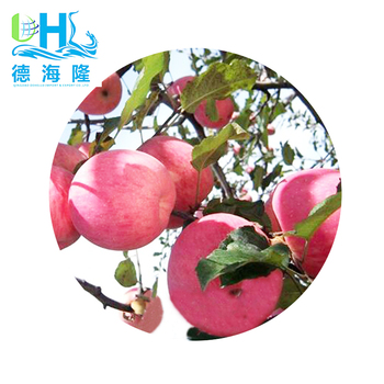 Chinese Fresh Fruit Delicious and juicy Red Fuji apple for human consumption