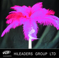 Professional Supplier Ostrich Feather Decoration AAH21