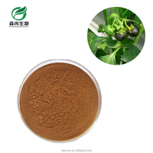 SR Factory Supply Belladonna Herb Extract