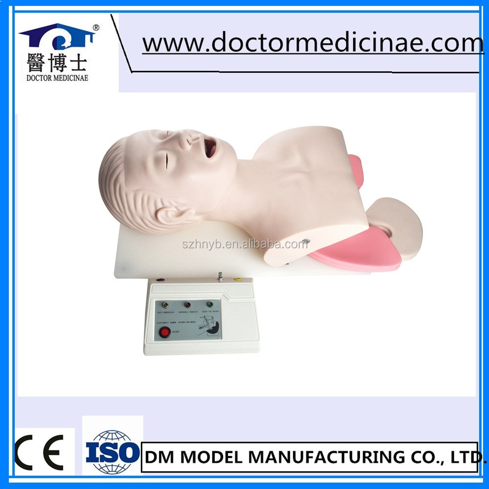 Electronic Adult Intubation Training Manikin