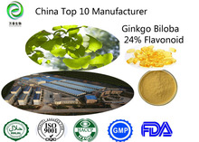 benefits ginkgo biloba 100% natural ,no additive ginkgo biloba leaf extract FDA,GMP factory