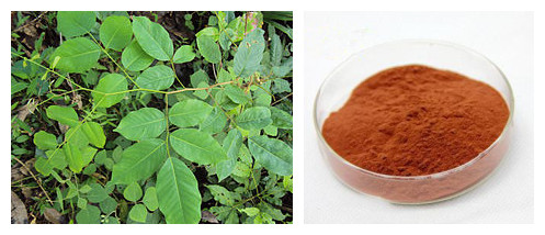 high quality Vijayasar/Pterocarpus marsupium extract powder factory direct sale and good price