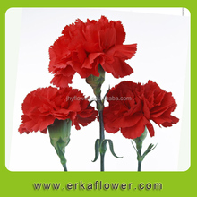 Different kinds of carnation namede smiling carnation country
