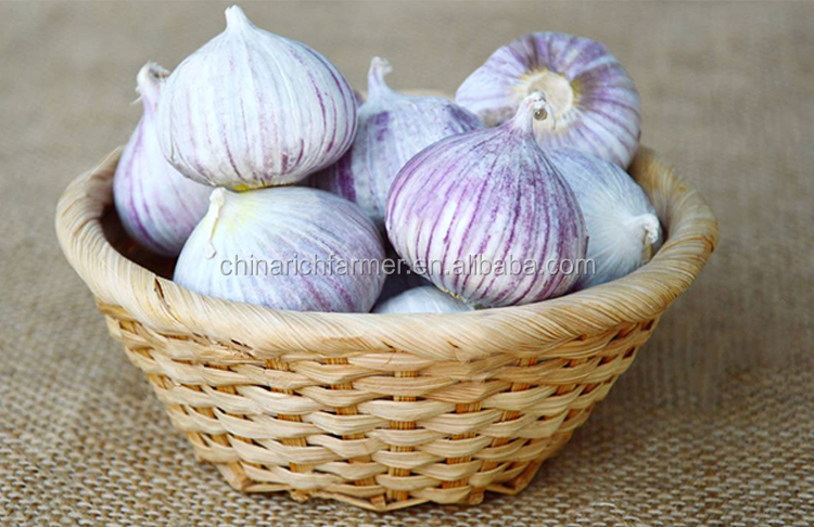 China Fresh Solo Single Garlic Cloves 3cm