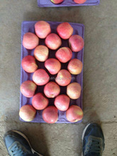 Grade A Fresh Fuji Apple Best quality Names of Red Fruit FOR SALE