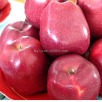 Red color fresh apple red delicious apple variety