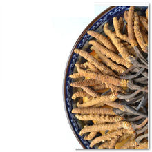 Good price of cordyceps 100% natural/Dry wild cordyceps