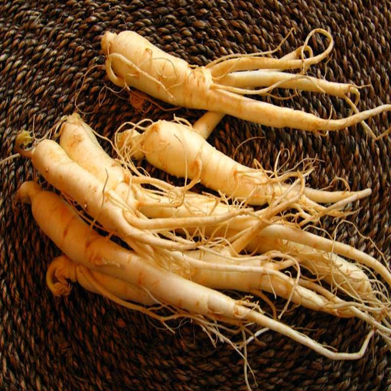 American Ginseng Extract, Ginsenoside, free sample for initial trial