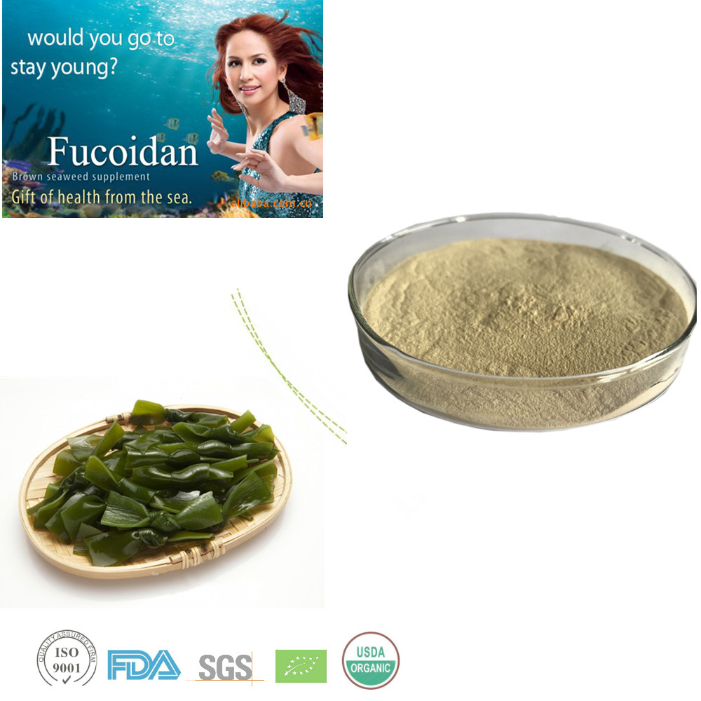 Directly provides ecklonia cava extract 10%-50% fucoxanthin extract powder