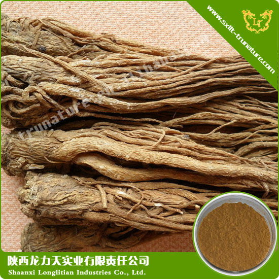 Largest Supplier Of Angelica/dong Quai Extract Used For Irregular Menstruation