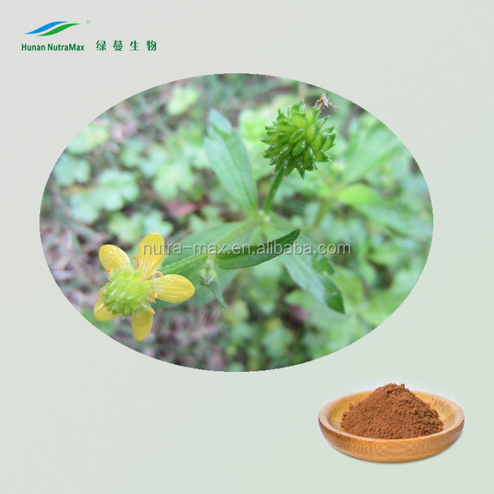Factory wholesale Cats claw Extract with 3% Ranunculus Ternatus